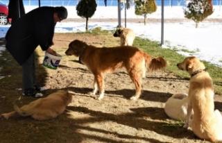 Belediye anonsla çağrı yaptı, hayvanseverler akın...