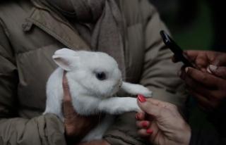 İspanya'da hayvanlar 'kutsandı'