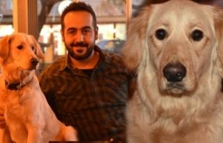 Kafe sahibi köpeği 'Bobo'yu kadına şiddet...