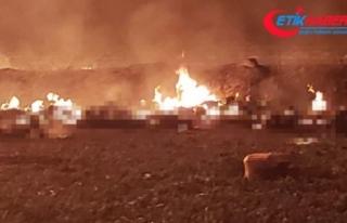 Meksika'da petrol boru hattında patlama: 21 ölü,...
