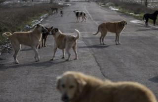 Sokak hayvanları için düzenli kısırlaştırma...