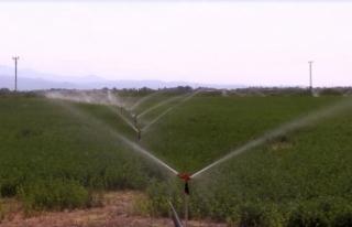 Elektrikte 'tarımsal faaliyetler tarifesi'...
