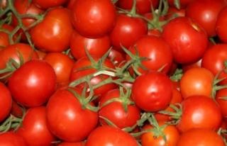 İstanbullular geçen yıl en çok domates ve patates...
