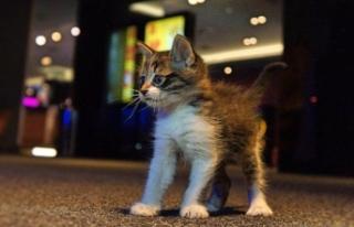 Sinema salonunda bulunan kedi çocukların ilgi odağı...