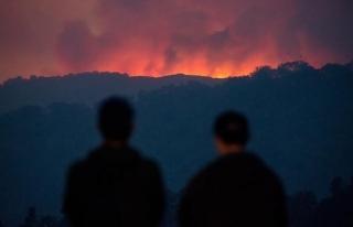 Yeni Zelanda'da orman yangını nedeniyle binlerce...