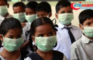 Hindistan'daki domuz gribi salgını 3 ayda 605...