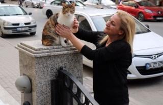 Kediye şiddete tepki gösterdiği için saldırıya...