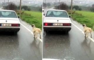 Köpeğini otomobile bağlayıp kilometrelerce koşturan...