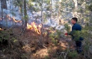 Ormanda çıkan yangında 4 hektar otluk alan kül...