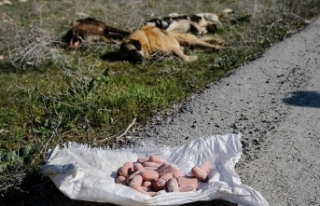 Başkentte köpek ölüleri bulundu