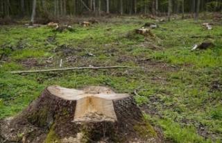 Dünyada 2018'de 12 milyon hektar ormanlık alan...
