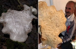 7 kiloluk mantar şaşırttı