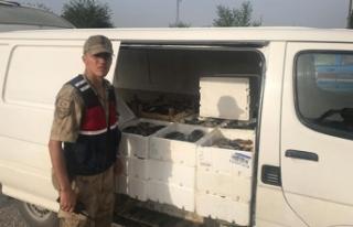 Kahramanmaraş'ta kaçak avlanan 1,2 ton balık...