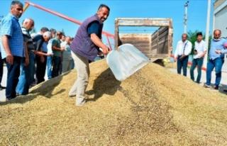 Mardin'de sezonun ilk arpa hasadı yapıldı
