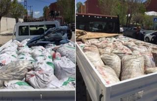 Van'da kaçak avlanan 10 ton inci kefali ele...