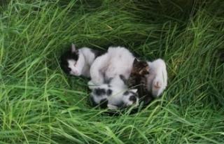 Yanan atölyedeki kedileri itfaiye kurtardı