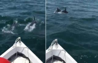 Yunuslar balıkçı teknesiyle yarıştı