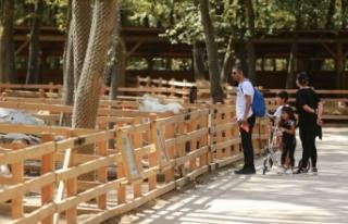 Bayram tatilinde milli park ziyaretçisi 4 milyonu...
