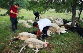 Eskişehir'de yıldırım düştü; 55 koyun telef...