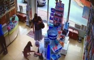 Yaralı köpek patisini kaldırarak eczacıdan adeta...
