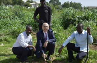 Çad'da 15 Temmuz şehitleri anısına ağaçlandırma...
