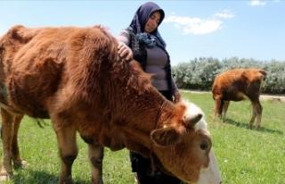 Devlet desteğiyle başladığı hayvancılıkla çocuklarını...