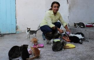 Kiraladığı evde 90 kediye bakıyor