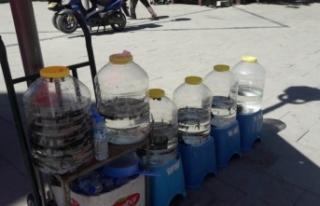 Konya'da yasa dışı sülük satışına 13...