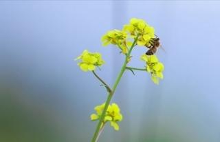Manisa'da arıların soktuğu kadın hayatını...