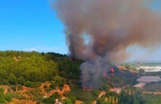 Antalya'da antik kent yakınında orman yangını