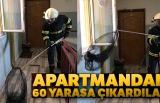Apartmandan 60 yarasa çıkardılar