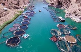 Barajlardaki su ürünlerinden ekonomiye yıllık...