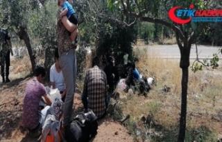 Çanakkale'de 3 günde 400 mülteci yakalandı