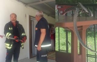 Erzincan'da eve giren yılanı itfaiye ekipleri...