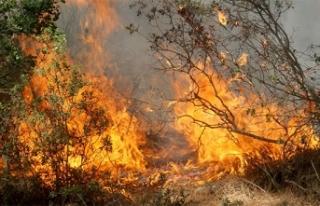 Muğla'da yanan ormanların yerine yeni fidanlar...