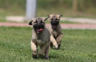 """Kırklareli Valisi Bilgin: """"12 köpeği katleden..."""