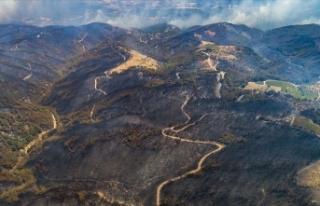 Bu yıl orman yangınlarında 5 bin hektar alan zarar...