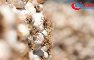 Çiğ soğan ve sarımsak meme kanseri riskini azaltıyor