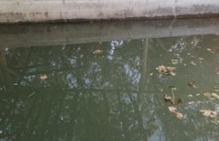 İki arkadaşın girdiği havuz sonları oldu