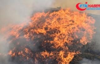 İstanbul'da orman yangınlarına ilişkin 3 PKK'lı...
