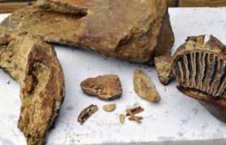 Rusya'da 372 milyon yıllık fosil bulundu