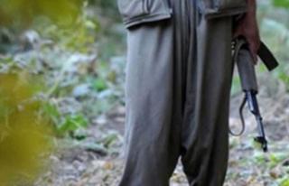 Siirt'te öldürülen teröristin, PKK'nın...