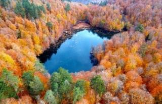 Türkiye'de 3,2 milyon hektar alana 'özel...