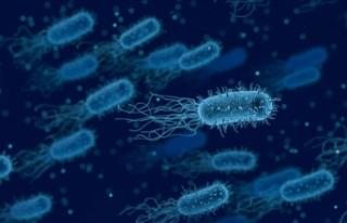 Bağırsaktaki bir bakteri kansere yakalanma riskini...