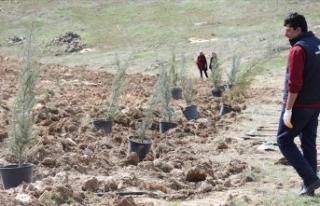 Bereket Ormanları Projesi ile 1 milyon 157 bin fidan...