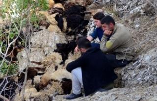 Bitlis'te uçurumdan düşen 315 koyun telef...