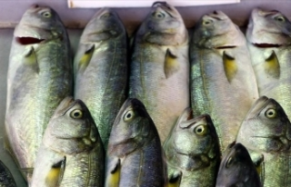 Lüfer Marmara'da balıkçının yüzünü güldürmeye...