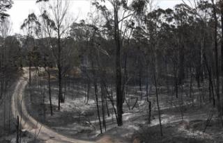 Avustralya'da yangından kaçan binlerce kişi...