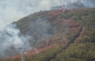 Avustralya'daki yangınlarda yaklaşık 5 milyon...