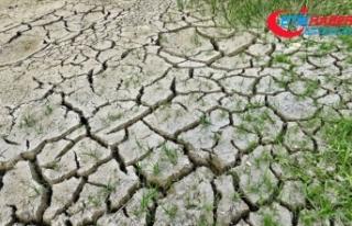 Dünya Sağlık Örgütü: İklim değişikliği 21'inci...